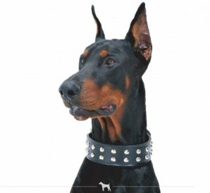 Bieler Leather Spot Series Halsband doppelt schwarz | Nowasell Animals Collection & More